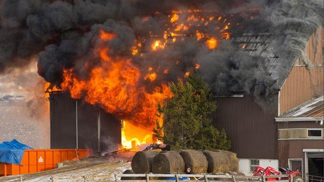 Update Horse Barn Fire Causes 500k Damage Yorkregion Com